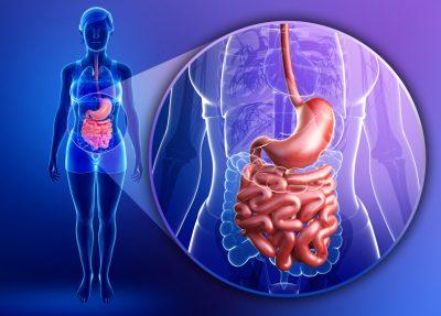 Digestive Fibre - Wellness Vision